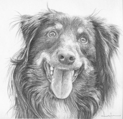Dog Sketch With Pencil